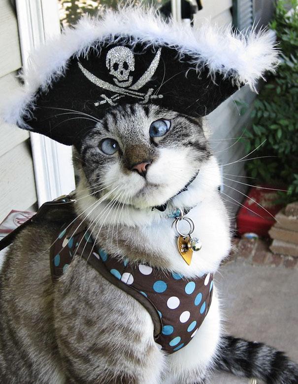 halloween gatti (29)