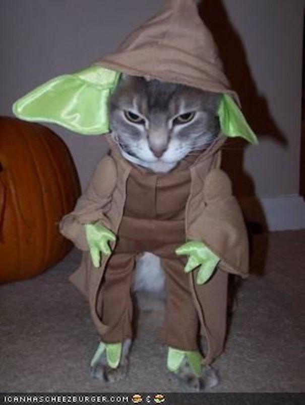 halloween gatti (3)