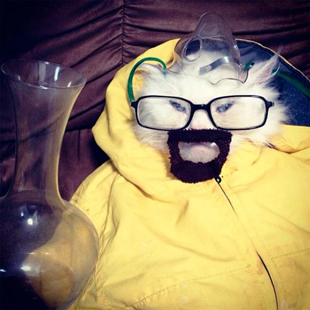 halloween gatti (30)