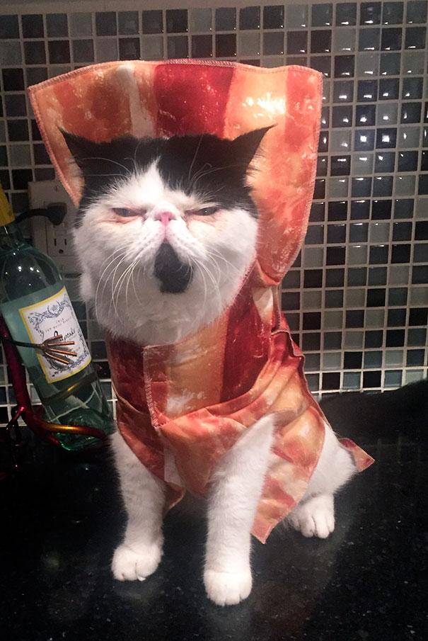 halloween gatti (31)