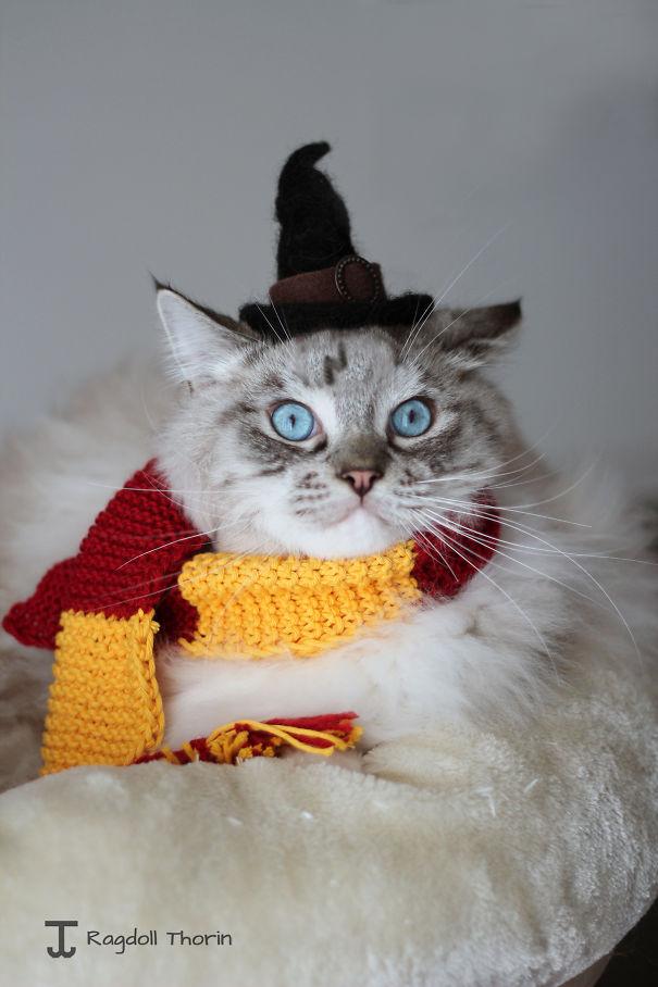 halloween gatti (32)