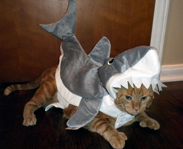 halloween gatti (33)