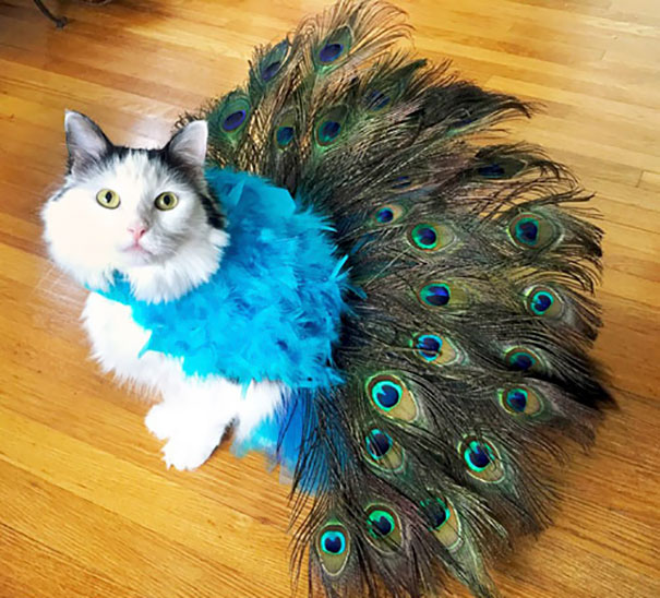 halloween gatti (35)