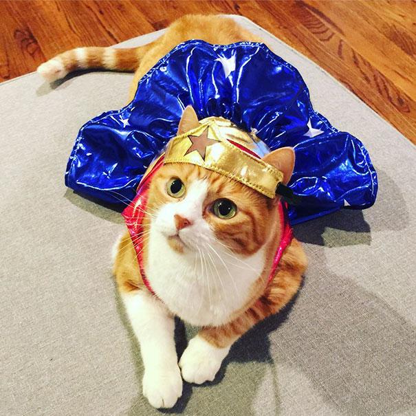 halloween gatti (38)