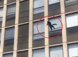 gatto cade d un palazzo