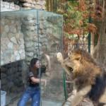 Leone zoo Libano