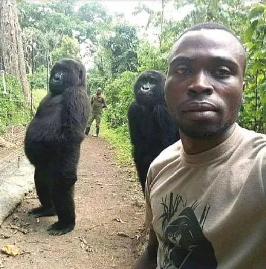 gorilla ndakasi