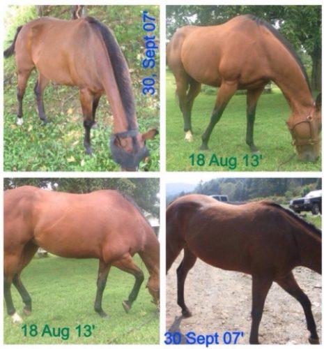 animali abbandonati prima e dopo (17)