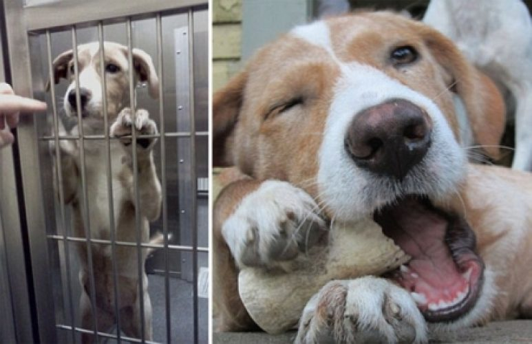 animali abbandonati prima e dopo (7)