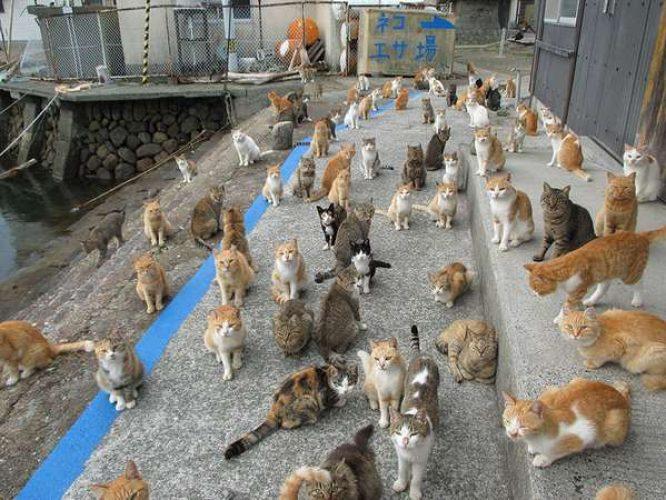 aoshima isola dei gatti (1)