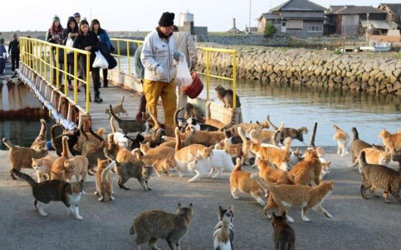 aoshima isola dei gatti (2)