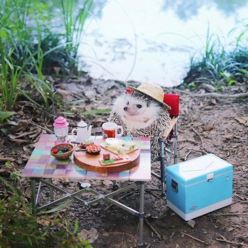 Azuki deve la sua popolarità ad un video virale dello scorso anno di cui era protagonista. Nel filmato, condiviso da milioni di persone sui social, il riccio giapponese era alle prese con il suo frutto preferito. La sua reazione davanti ad un piccolo pezzettino di mela ha conquistato tutti. Grazie al suo adorabile musetto, oggi Azuki è una navigata star di Instagram con 180mila follower.