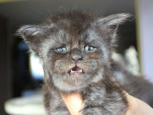gatto valkyrie (2)