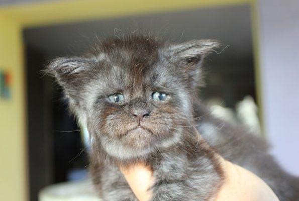 gatto valkyrie 3
