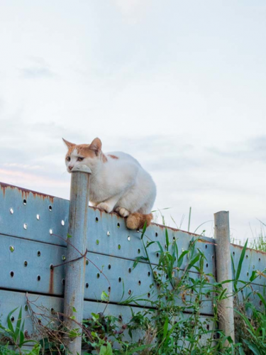 illusioni ottihce animali (1)
