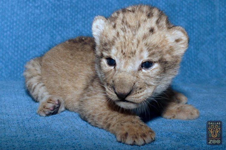 leone bahati (1)