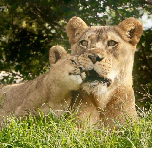 leone bahati (11)