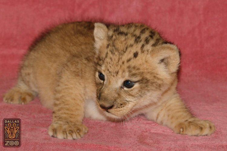 leone bahati (17)