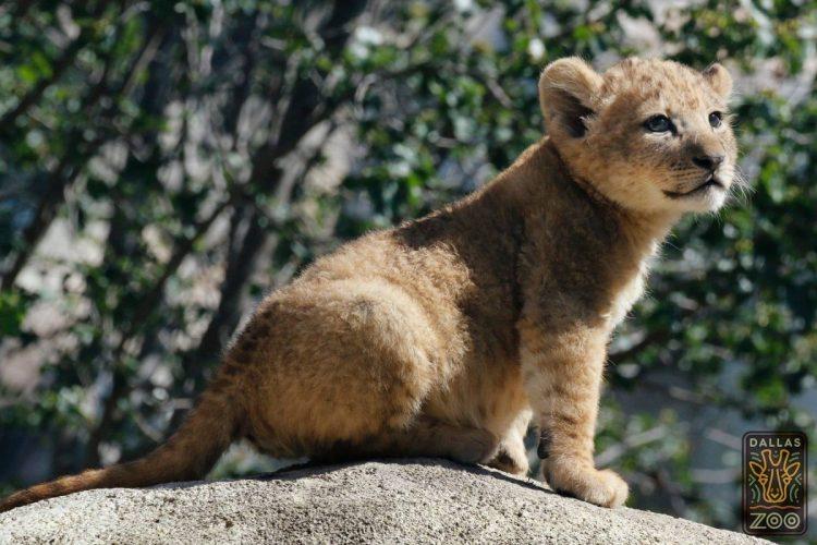 leone bahati (3)