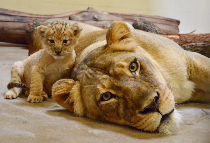 leone bahati (6)