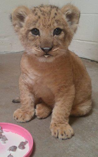 leone bahati (8)
