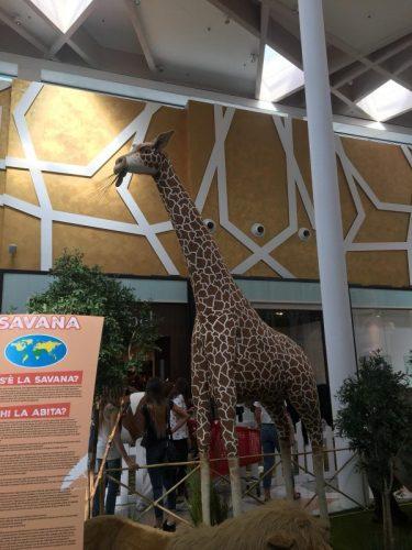 lo zoo che vorrei (1)