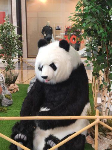 lo zoo che vorrei (11)