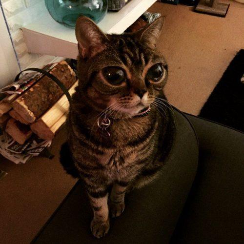 matilda-gatto-alieno-3