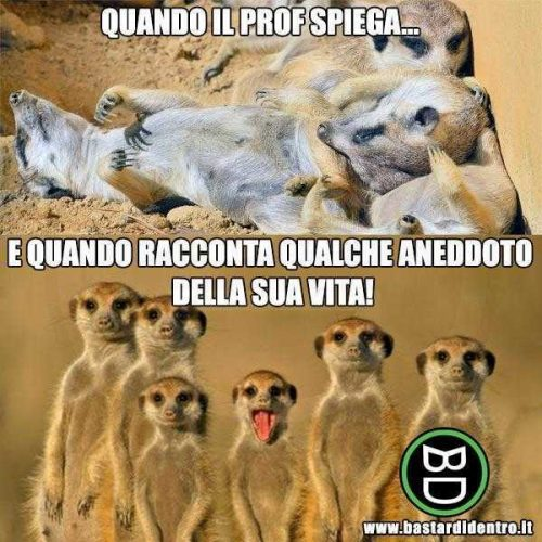 suricato (9)