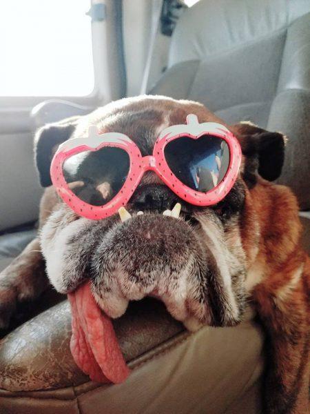 zsa zsa cane più brutto del mondo (7)